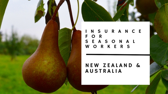 health and travel insurance for seasonal workers blog with photo of pears